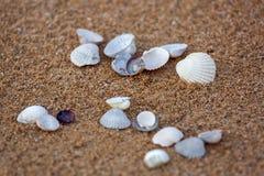 Mentira de las conchas de berberecho del mar en la arena Fotografía de archivo