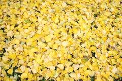 Mentira de las hojas del amarillo en la tierra imagen de archivo