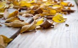 Mentira de las hojas de otoño en la tabla fotos de archivo libres de regalías