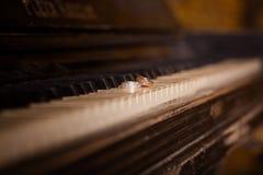 Mentira de los anillos de bodas en las llaves del piano fotos de archivo