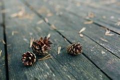 Mentira de três colisões em uma tabela de madeira Cones na floresta Imagens de Stock Royalty Free