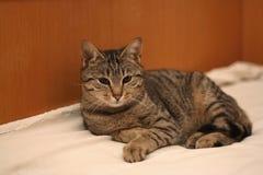 Mentira del gato Fotos de archivo libres de regalías