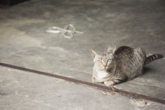 Mentira del gato fotografía de archivo
