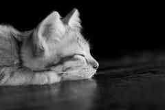Mentira del gato del gatito del sueño en el primer de tierra de madera en su negro de la cara Imagen de archivo