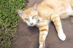 Mentira del gato del jengibre al aire libre foto de archivo libre de regalías