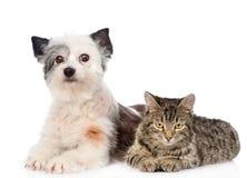 Mentira del gato y del perro cerca Aislado en el fondo blanco Fotos de archivo