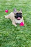 Mentira del perro en el parque con la bola Imagen de archivo