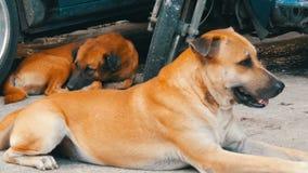 Mentira desabrigada bonito dos cães na rua vídeos de arquivo
