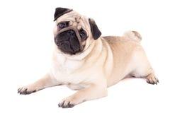 Mentira divertida del perro del barro amasado aislada en blanco foto de archivo libre de regalías
