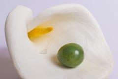 Mentira do ovo do jade em uma flor branca Fotografia de Stock Royalty Free