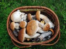 Mentira dos cogumelos em uma cesta de vime Foto de Stock