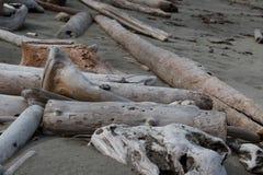 Mentira gris, marrón y blanqueada de los registros y de los pedazos de la madera de deriva derramada sobre una playa negra de la  Imagen de archivo