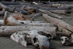 Mentira gris, marrón y blanqueada de los registros y de los pedazos de la madera de deriva derramada sobre una playa negra de la  Foto de archivo libre de regalías