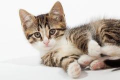 Mentira joven del gatito Foto de archivo libre de regalías