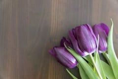 Mentira púrpura de los tulipanes en una tabla de madera Flores de la primavera para querido fotografía de archivo libre de regalías