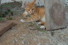 mentira relajante del gato en la tierra Imágenes de archivo libres de regalías