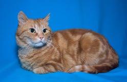 Mentira roja del gato Foto de archivo libre de regalías