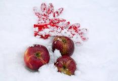 Mentira vermelha das maçãs na neve Mentira de lã vermelha próxima das luvas Foto de Stock Royalty Free