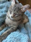 Mentiras y sueño tricolores del gato imagen de archivo libre de regalías
