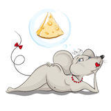 mentiras y sueños del Atractivo-ratón sobre el queso Fotografía de archivo libre de regalías