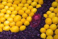 Menton Lemon Festival 2018, Bollywood Theme art made of lemons and oranges, close-up Royalty Free Stock Photos