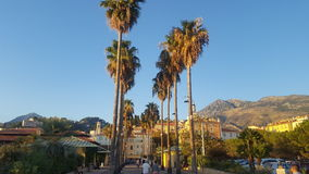 Menton. Palm tree view in Menton south of France Stock Photography