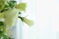Mentre fiore su fondo bianco Fotografia Stock