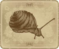 Menu with snail, hand drawing. Stock Photography