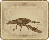 Menu z rocznika ramą i crayfish, ręka rysunek royalty ilustracja