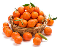 Meny tangerines with leaves in a basket. Tangerines with green leaves in a basket with some on the surface in the foreground on white stock image