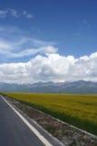 menyuan qinghai πεδίων λάχανων της Κίνα&sigma Στοκ εικόνες με δικαίωμα ελεύθερης χρήσης