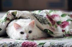 Menzogne bianca del gatto Fotografia Stock