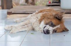 Menzogne del cane Immagini Stock Libere da Diritti