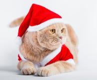 Menzogne del gatto del popolare dello scottish di Natale Fotografia Stock