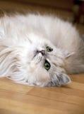 Menzogne del gatto persiano Fotografia Stock Libera da Diritti