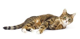 Menzogne del gatto. Sguardo sorpreso. Occhi rotondi. Isolato Immagini Stock