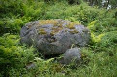 Menzogne di pietra grigia sulla terra nella foresta Immagine Stock
