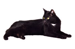 Menzogne green-eyed nera del gatto isolata Fotografie Stock