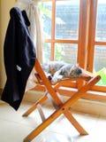 Menzogne malata del gatto sulla sedia di legno Fotografia Stock