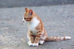 Menzogne piccola del gattino Immagine Stock