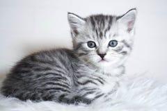 Menzogne a strisce del gattino Fotografie Stock