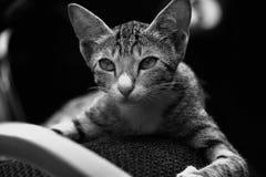 meow royalty-vrije stock foto's