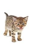Meow images libres de droits