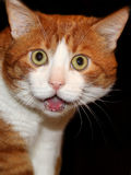 meow immagini stock libere da diritti