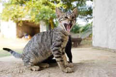 Meow immagine stock libera da diritti