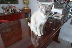 meow royalty-vrije stock afbeeldingen