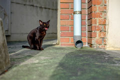 Meow of black street cat in Naha. Japan royalty free stock image