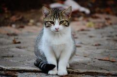 Meow Stock Image