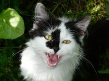 Meow Meow Στοκ Εικόνες