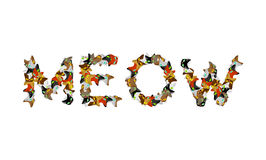 Meow sign text. Letters of cats. Pet font. home Animals typograp Royalty Free Stock Photography